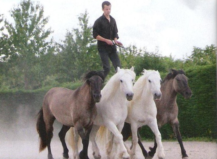 Le Poney Highland